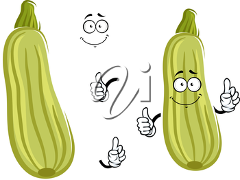 Smiling cartoon zucchini vegetable character with striped pale green peel giving thumb up. Isolated on white background