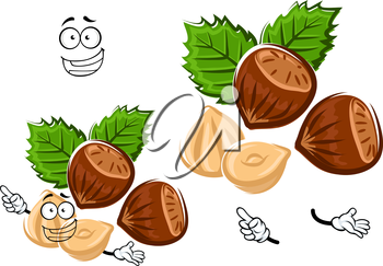 Healthful happy hazelnut cartoon character with brown nuts, shelled kernel and carved green leaves, isolated on white