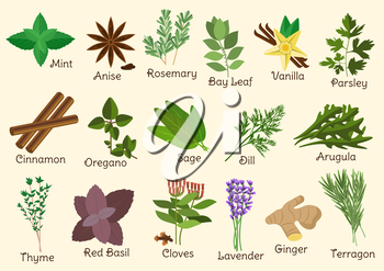 Herbs, condiment and spices with twigs and seeds of parsley, mint and rosemary, red basil and dill, anise star and thyme, cloves and oregano, cinnamon and ginger, bay leaf and vanilla, sage and arugul