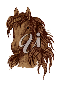 Brown running mustang portrait. Horse stallion looking ahead with wavy mane and kind shiny eyes