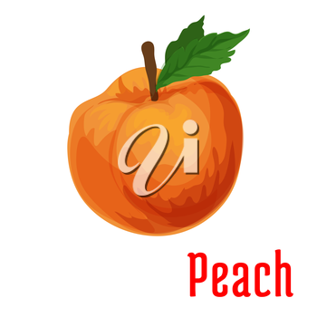 Fresh juicy peach fruit icon isolated on stem with leaves. Botanical style product emblem for juice sticker design element, jam label, packaging tag, grocery shop, farm store decoration