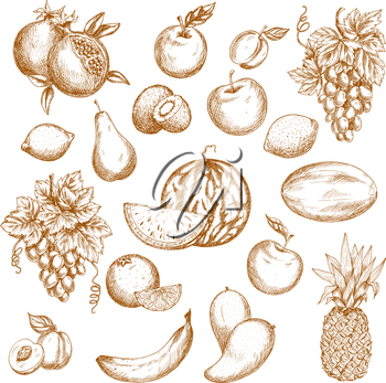 Fruit sketch set. Apple, orange, grape, banana, pineapple, mango, peach, plum, lemon, watermelon, pear, kiwi, melon, pomegranate, apricot, lime fruits for food, drink, vegetarian dessert recipe design