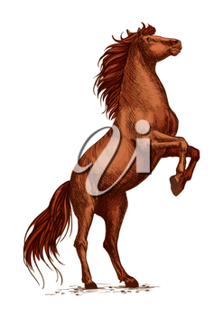Wild arabian brown horse stallion raging and rearing on rear hoof. Vector sketch strong horse for sport races, equestrian sport, horse racing icon, label. Ranch mustang in free motion