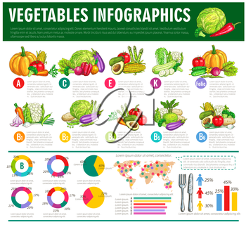 Vegetables infographics. Vector graph charts or diagrams of consumption, vitamines or veggies nutrition facts. Vegetarian healthy food statistics of squash, avocado and cabbage, beet, cucumber and tom