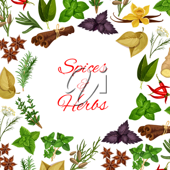 Seasoning herbs and spices condiments. Spicy herbal cooking ingredients of rosemary and thyme, basil, dill and parsley, sage and bay leaf, anise and oregano, ginger and aromatic vanilla with mint, cin