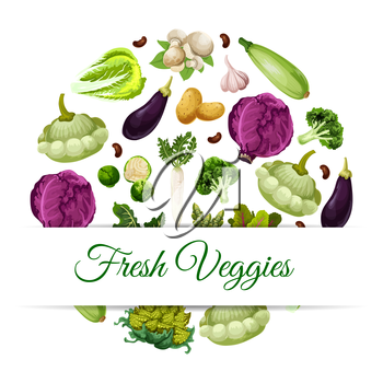 Fresh vegetable food banner. Pattypan squash and broccoli, asparagus and daikon, mushroom and garlic, broad beans and beets, red cabbage and zucchini or courgette, potato and eggplant. Health vegetari