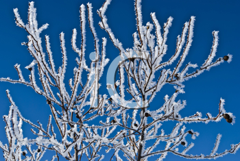 Royalty Free Photo of a Frozen Branch