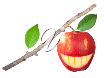 Dry branch with apple smile