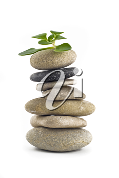 Green Life - balanced stone tower with plant on the top over white