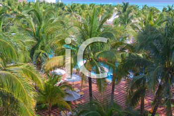 Royalty Free Photo of Palm Trees