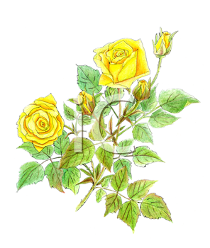 Royalty Free Clipart Image of Yellow Roses