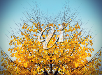 Bright yellow abstract autumn tree on sky background