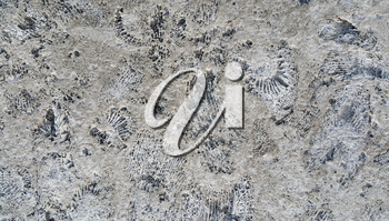 Background of ammonite fossils on a rock
