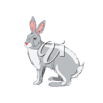 Illustration of hand drawn rabbit isolated on white background