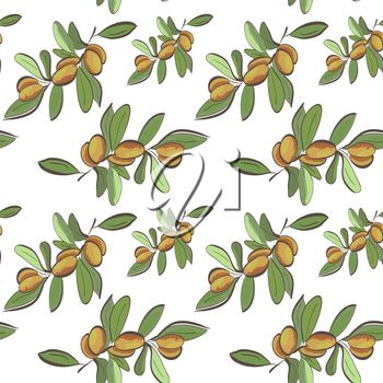 Seamless flat argan fruits pattern on white background