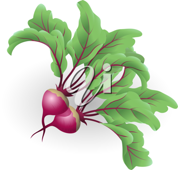 Royalty Free Clipart Image of Beetroots