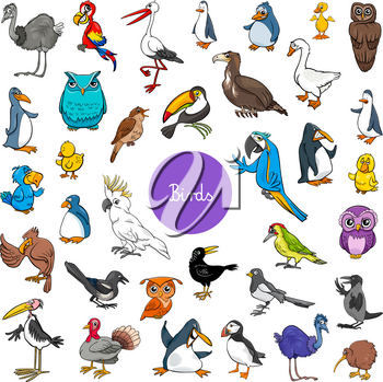 Cartoon Illustration of Birds Animal Characters Big Set