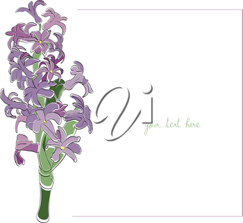 Hyacinth card illustration, one element composition with simple frame over white