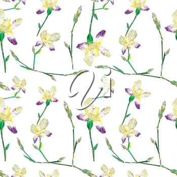 Floral seamless pattern with iris flowers over white