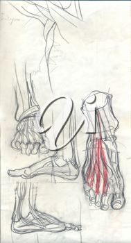 Hand drawn anatomy doodles and text, pencil drawing iilustrations of feets over obsolete paper with spots