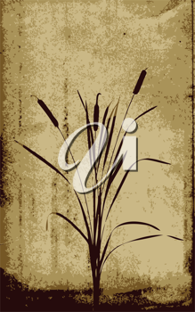 Royalty Free Clipart Image of Bulrushes
