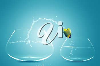 Royalty Free Photo of an Angelfish Jumping into a Smaller Fishbowl