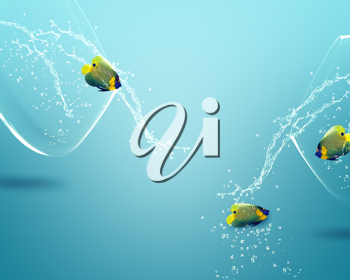 Royalty Free Photo of Three Angelfish Swimming on a Blue Background With Bubbles Surrounding Them