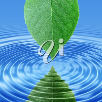 Abstract background of a reflect green leaf in blue water. Close-up.