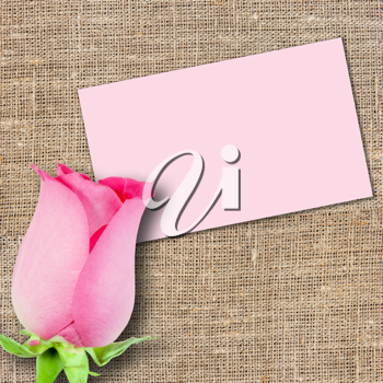 One pink rose and message-card on textile background. Close-up. Studio photography.