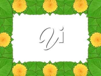 Floral frame with yellow flowers and green leaf on white background. Nature art ornament template for your design. Close-up. Studio photography.