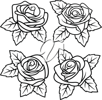 Roses with leaves. Vectors