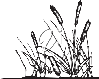 Royalty Free Clipart Image of a Patch of Reeds
