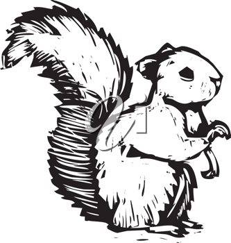 Royalty Free Clipart Image of a Squirrel