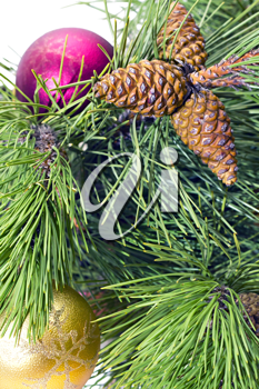 Royalty Free Photo of a Decorated Pine Branch