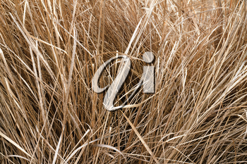 image background stems of last year's dry grass