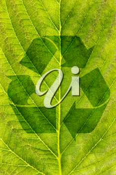 ecological recycling concept.  recycle symbol on green leaf texture