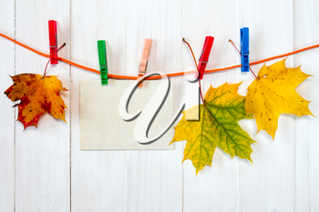 Autumn maple leaves and blank card hanging on rope with clothespins