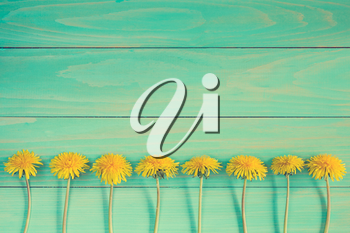 Dandelion flowers on a blue wooden background