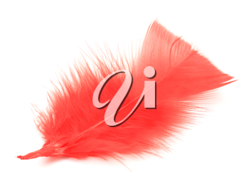 Red feather on the white background