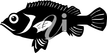 silhouette of the rockfish on white background