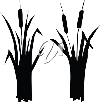 silhouette of reed