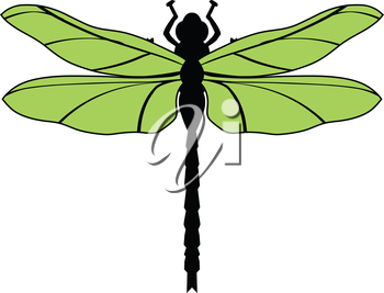 vector illustration of dragonfly, top view