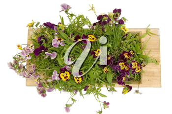 Royalty Free Photo of a Trough With Pansies