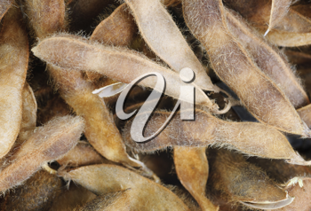 Royalty Free Photo of a Dried Pea Background