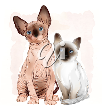 portrait of the  Canadian sphinx cat and thai kitten on the watercolor background