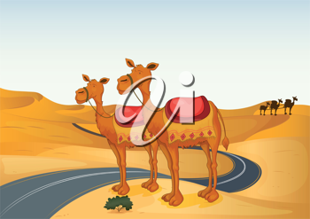 illustration of camels in a desert and road