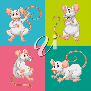 Mouse in four color backgrounds illustration