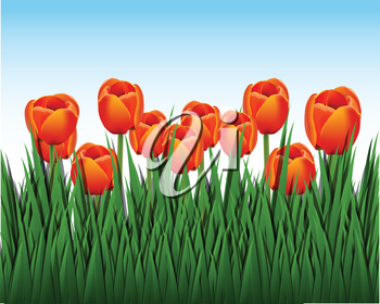 Royalty Free Clipart Image of a Field of Tulips