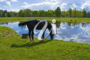 Royalty Free Photo of a Horse Drinking Water