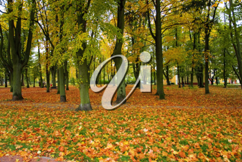Royalty Free Photo of an Autumn Forest